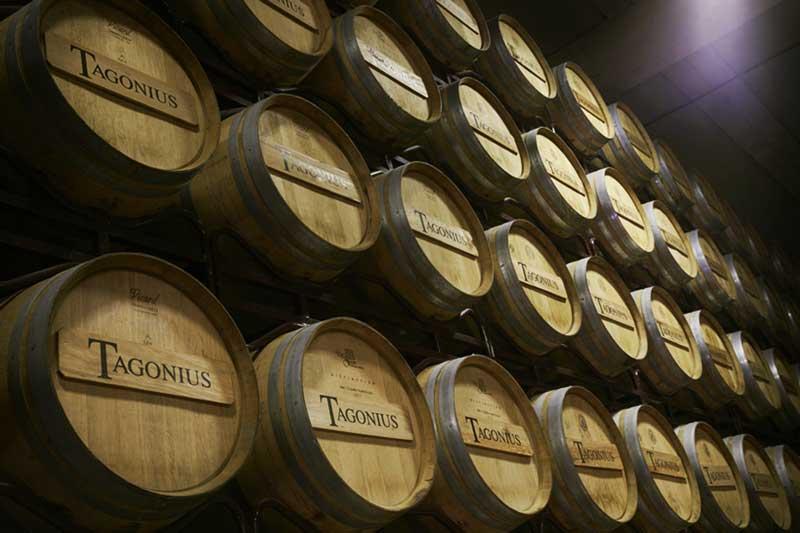 Cata de vinos Tagonius